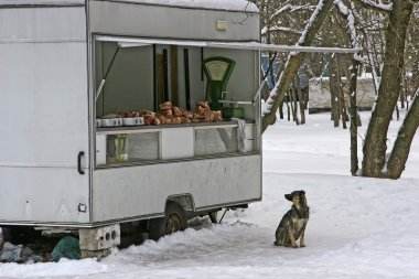 Hungry dog in winter looking at the old van selling meat. The pi