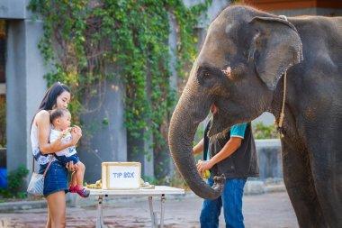 Many people feeding food to baby elephant