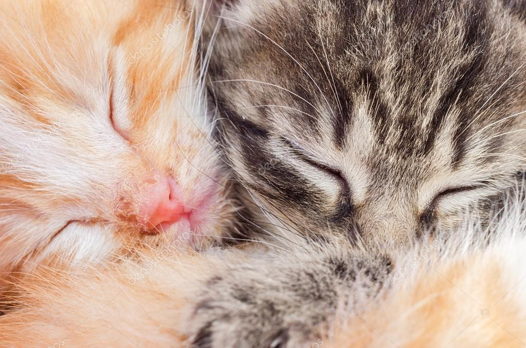 Two sleeping kittens close-up