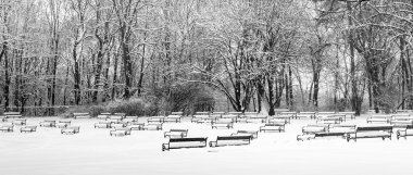 Park benches covered with snow
