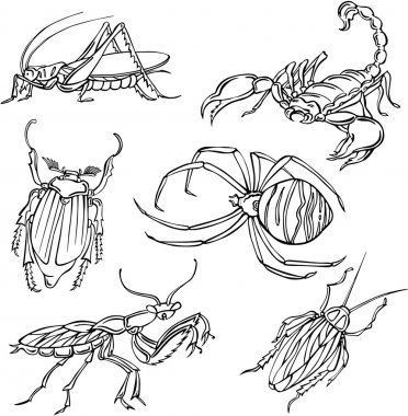Vector illustration of various insects
