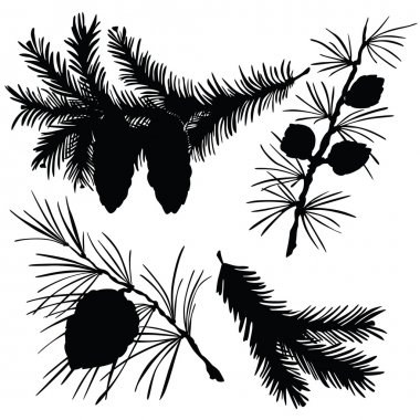 Vector illustration of silhouettes of fir branches