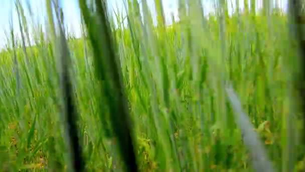 Pohyb kamery v zelené trávě