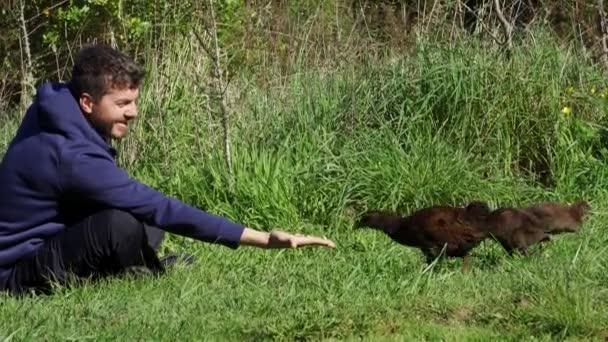 Běloch krmí ptáka Weka a jeho děti. endemický pták Nového Zélandu