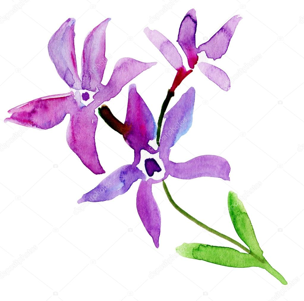 Watercolor Spring Flowers With Buds Stock Photo Olies 76281423