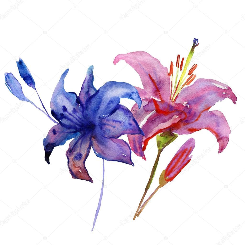 fiori dipinti ad acquerello foto stock olies 90360400