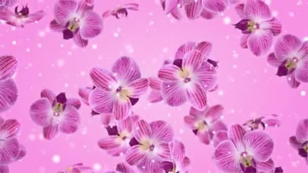 Flowers Falling Orchidee Hintergründe Looped Video