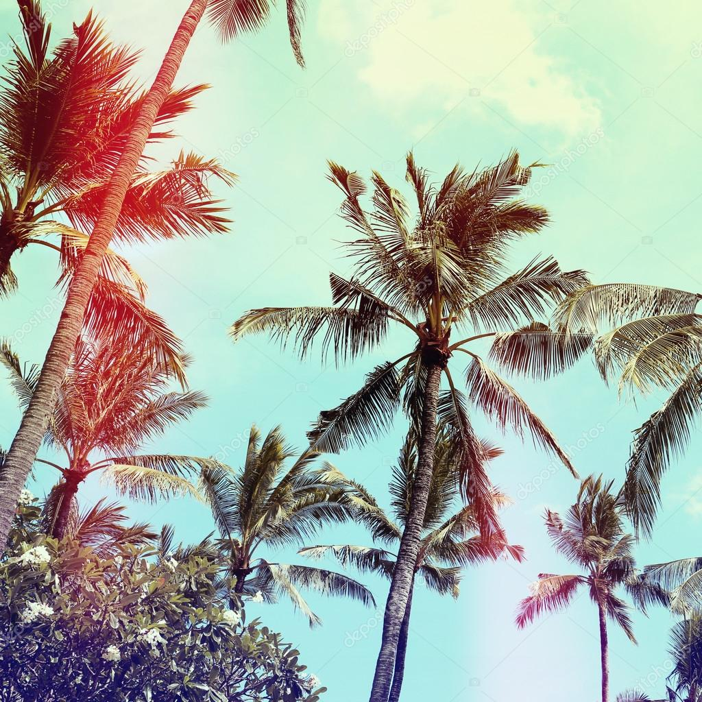 palm trees, vintage effect