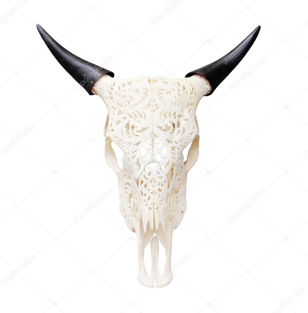 Buffalo skull isolated
