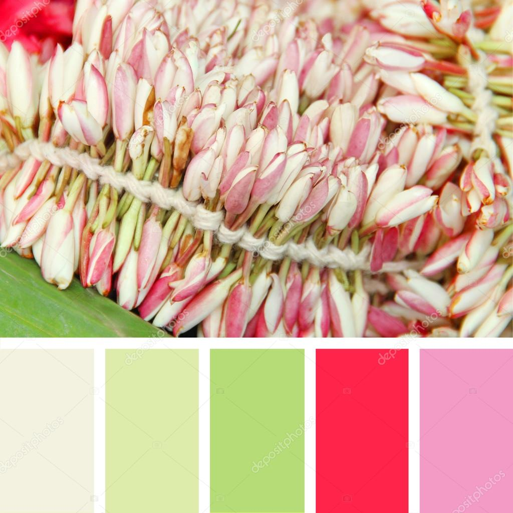 Blooming pink flowers.  color palette swatches