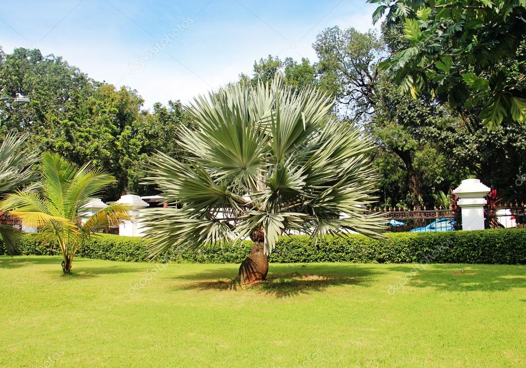 Palm tree in a beautiful park