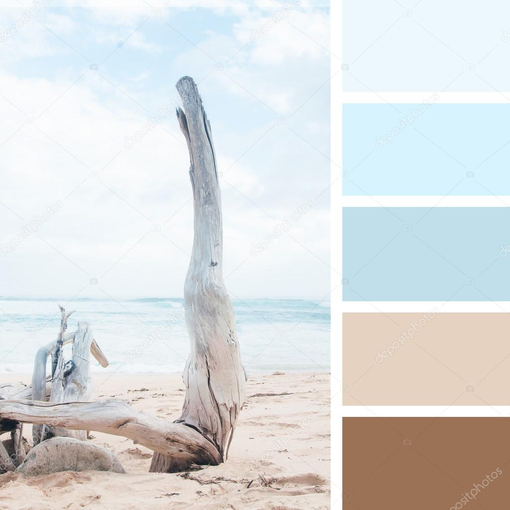 Dry tree on the beach.  color palette swatches. pastel  hues