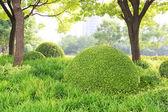 Fotografie schöner Park mit grünen Bäumen