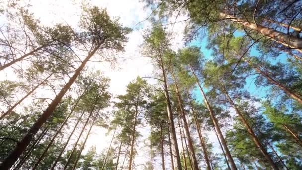 POV. Kráčím lesem, stálý záběr kamerou. Zpomalený záznam