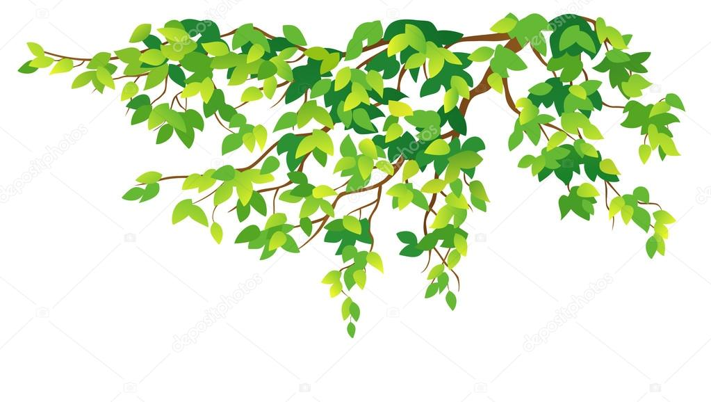 branche d 39 arbre vert image vectorielle merggy 65015835. Black Bedroom Furniture Sets. Home Design Ideas