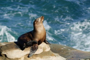 Sun Bathing Sea Lion