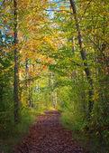 Cesta lesem podzimní
