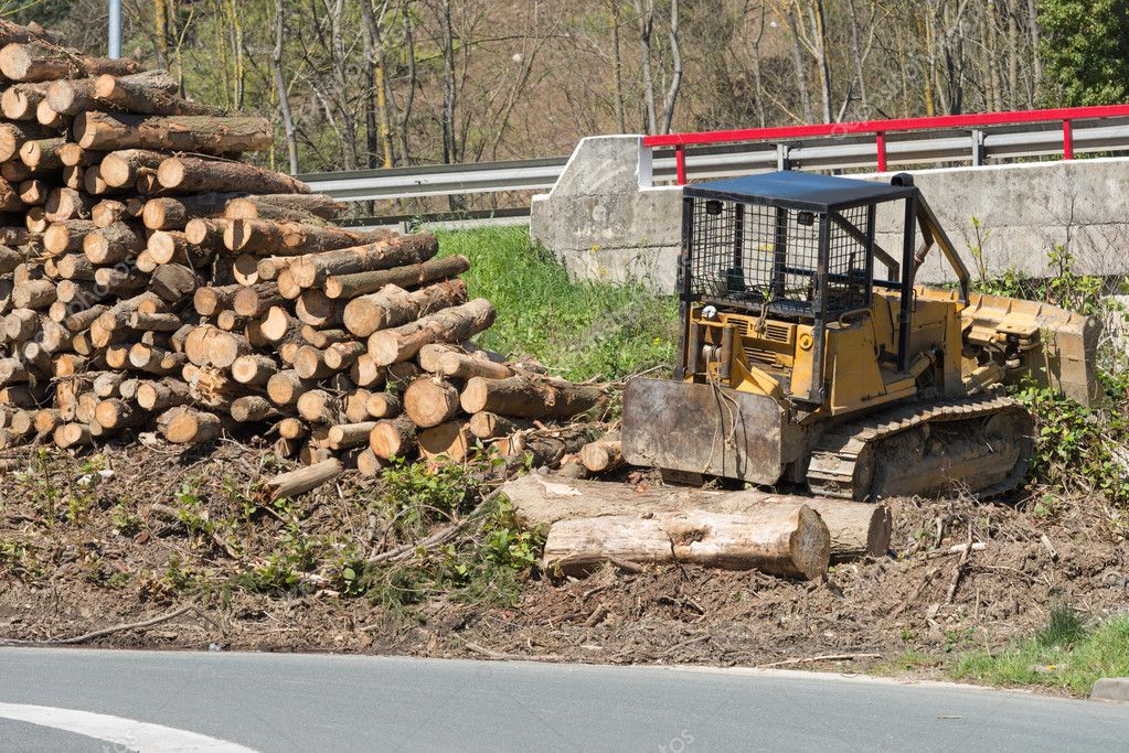 logs at the sawmill