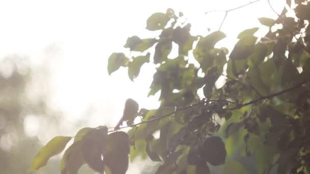 Pozadí zelené listy světlé pozadí s Sun Light