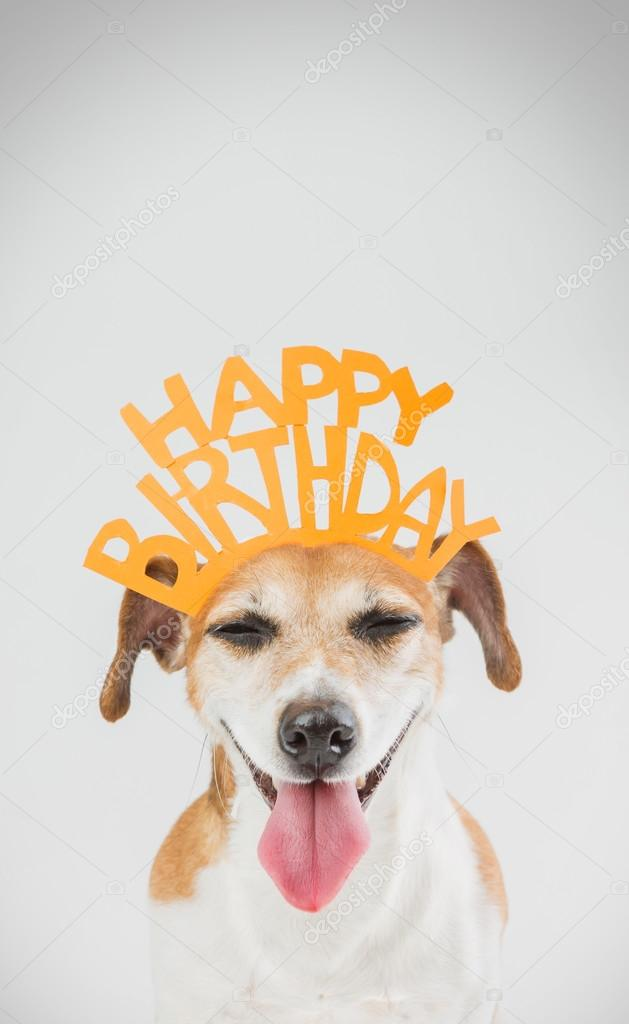 Happy Birthday Card With Laughing Joy Dog Jack Russell Terrier