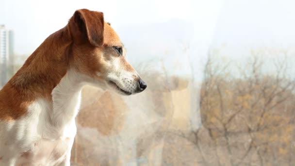 Aranyos kutya, a nagy napsütötte ablak közelében