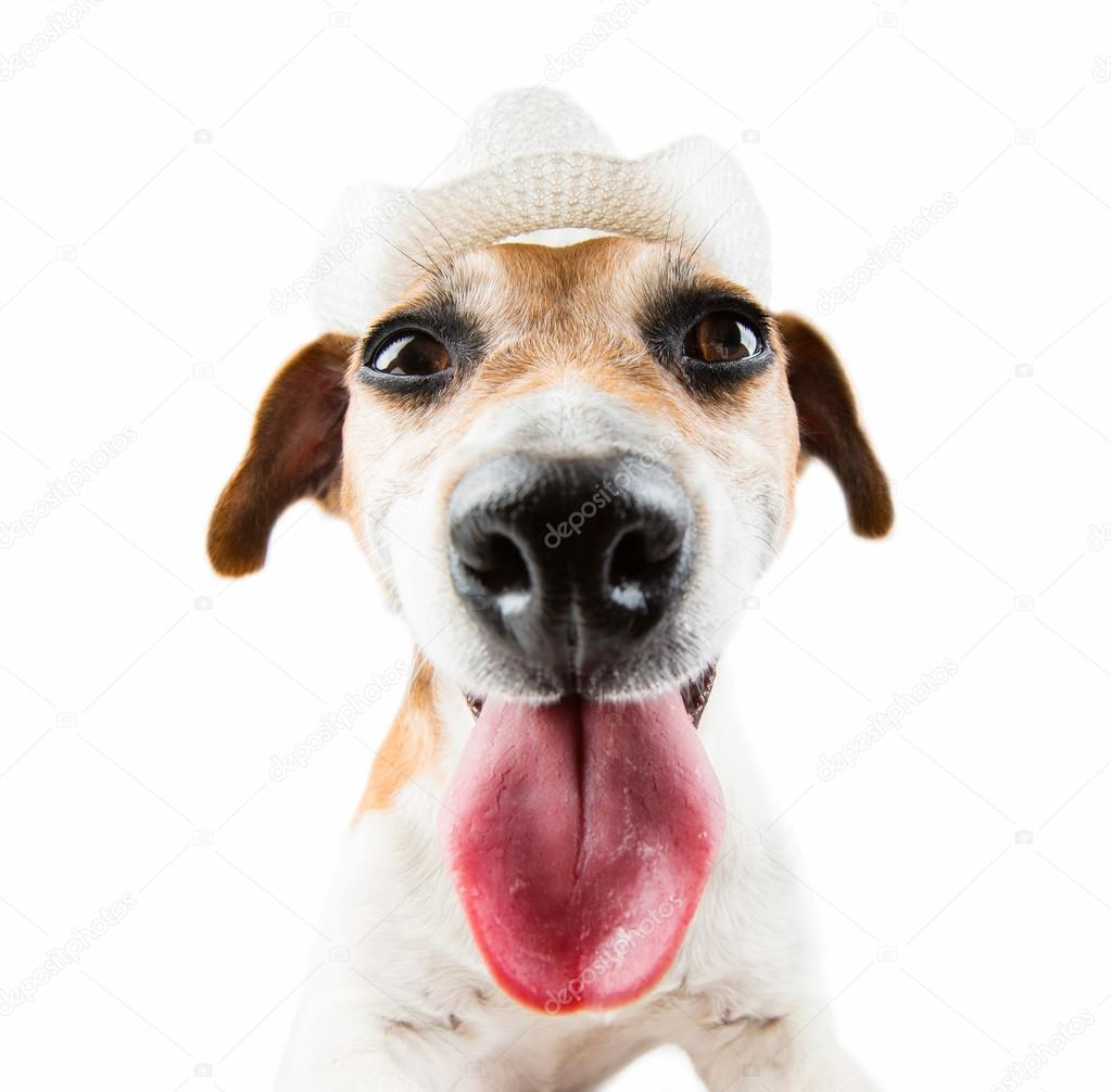 dog pulled out tongue in a cowboy hat