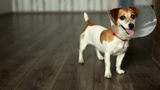 roztomilé malé veterináře pes