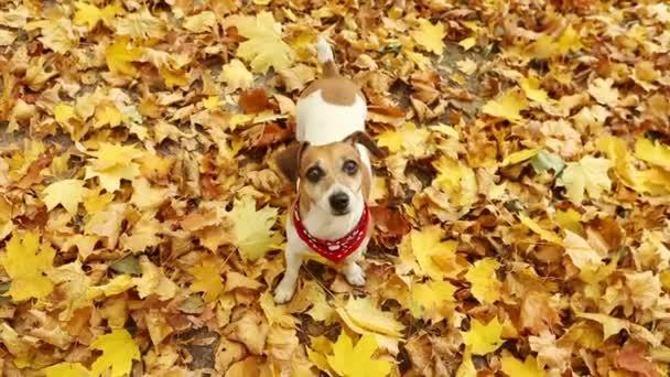 Dog autumn look
