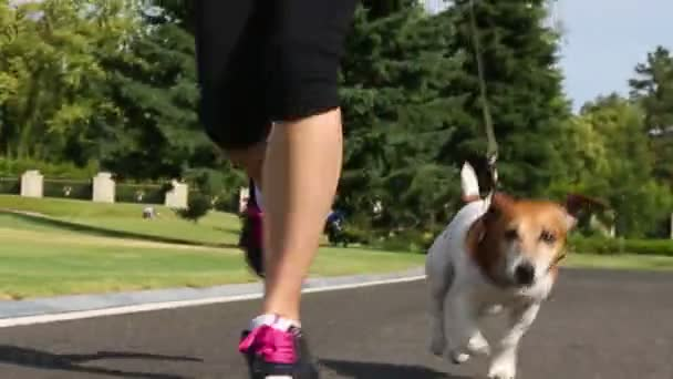 jogging with dog Jack russel terrier