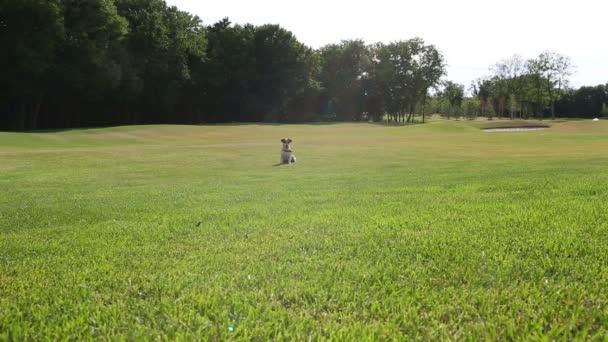 Slunečný letní den pes na zelené louce