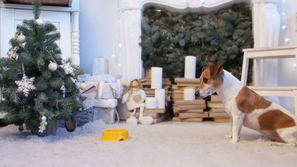 Christmas interior dog food