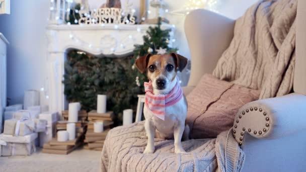 dog waiting look christmas  decorations interior