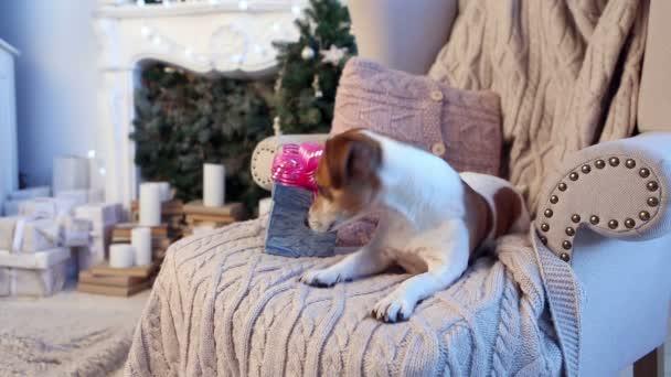 zvědavý pes otevírací box s novoroční dárek