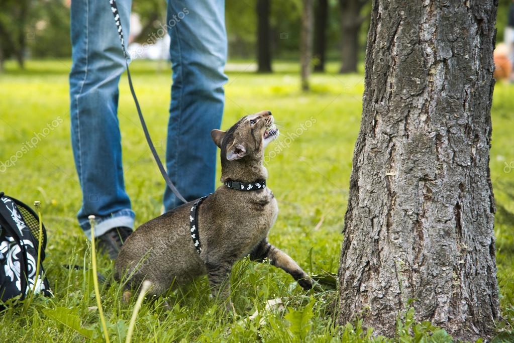 gato quiere subir al árbol — Foto de stock © vasilisa_k #75883203