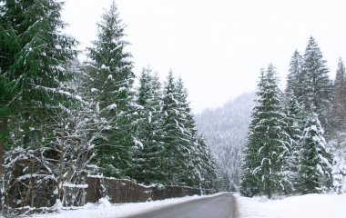 Asphalt road between the snow-covered forest. Road in the alpine forest