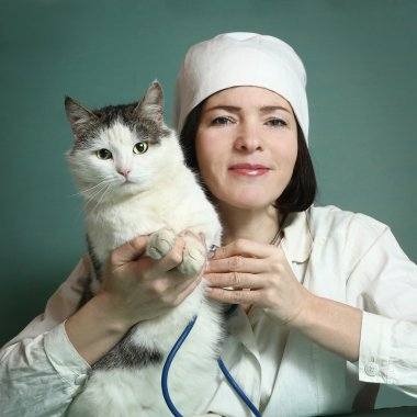 veterinarian woman examine siberian cat