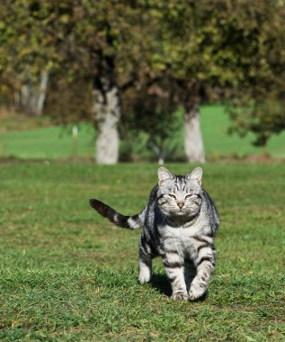 Dead cat in yard