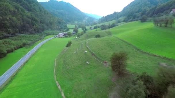 malá vesnice s ovcí na hřišti