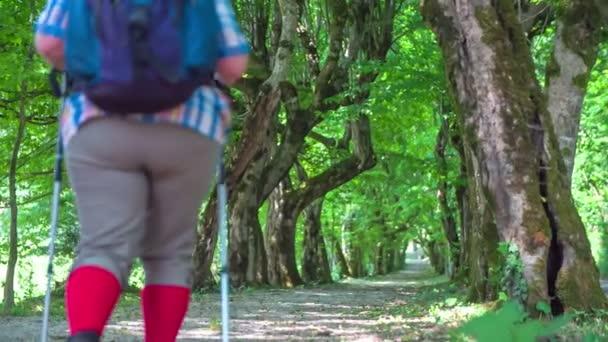 Két idős túrázók, séta a természetben.