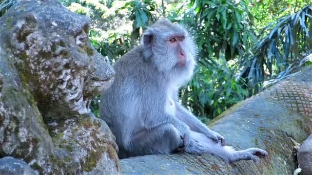 Monkey sitting on stone fence