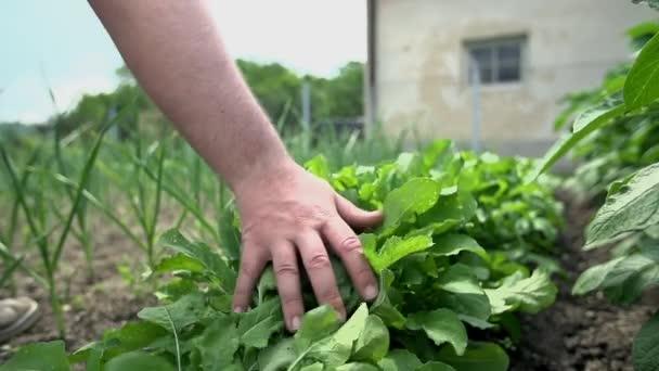 muž smyslně dotýká zeleninu