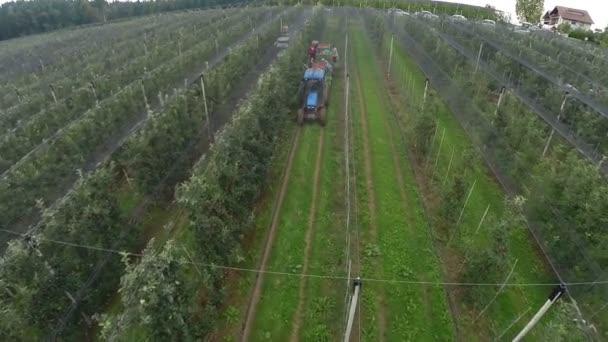 arbeitenden Menschen im Feld großer Apfel