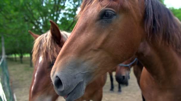 Koně, kteří hledají kameru