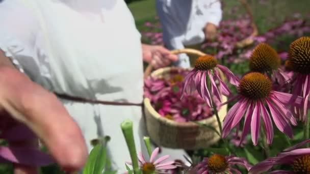 Ruky vyrvána ze květiny