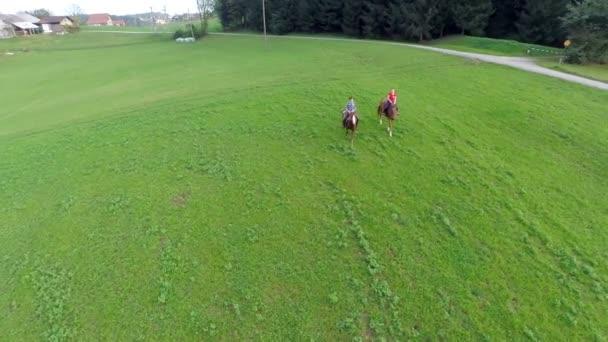 dva koni přes pole