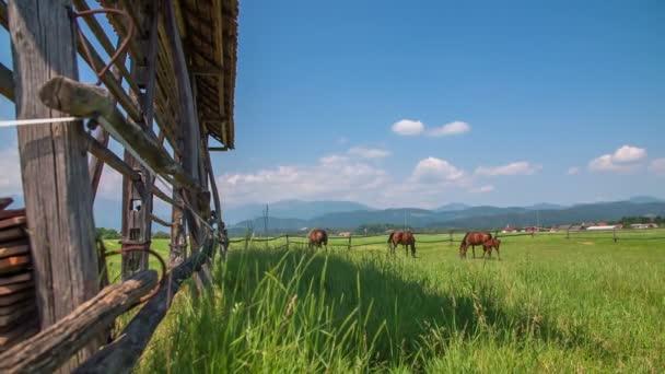 koně jíst trávu seník venku v přírodě