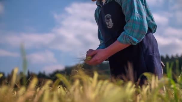farmář vyskladnění pšenice