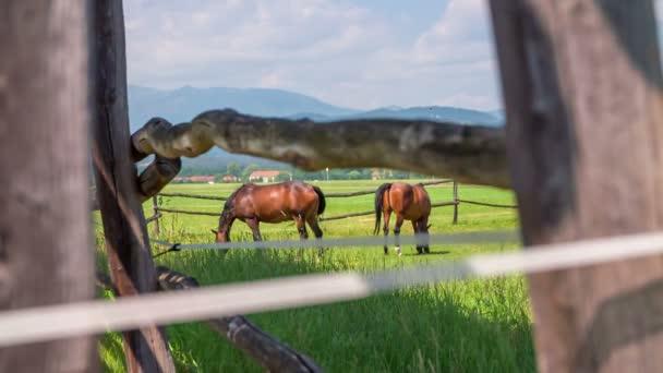 Pferde werden auf dem Land gesehen