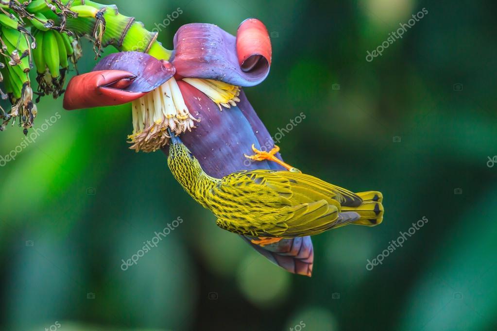 Πιπιλίζουν το πουλί μου για δωρεάν