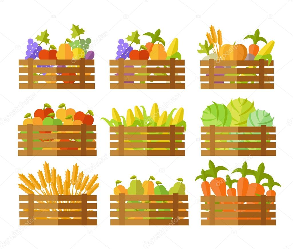 Set of Boxes With Fruits and Vegetables in Vector.